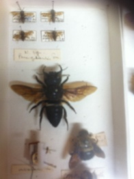 Up close with the Natural History collections