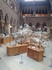 The Oxford Natural History Museum